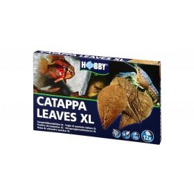 Feuilles de Cattapa XL Hobby