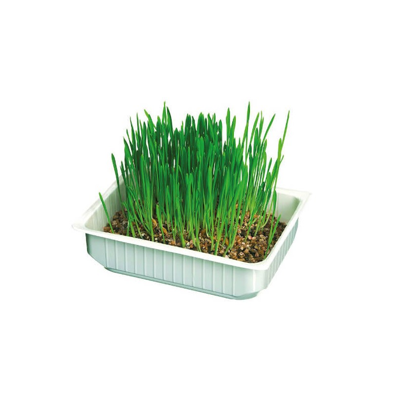 Barquette d'herbe à chats Camon