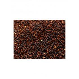 Graines de navette Vadigran-Vadigran-207010