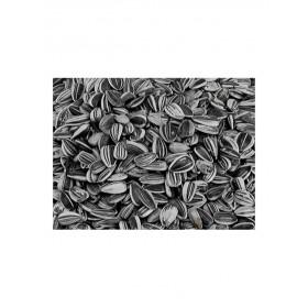 Petites Graines de Tournesol striées Vadigran-Vadigran-216010