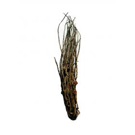 Branche de noix de coco 45 à 60 cm