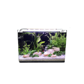 Aquarium Néophyte 60