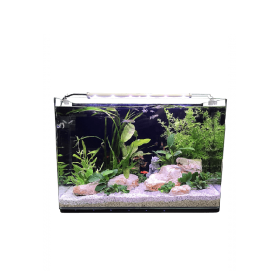 Aquarium Néophyte 80