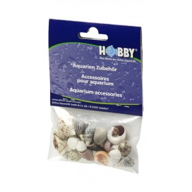 Coquillages Hobby Sea Shells Set