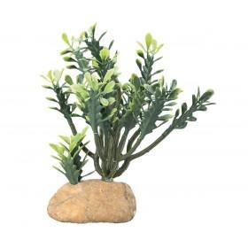 Plante en plastique Hobby Euphorbia