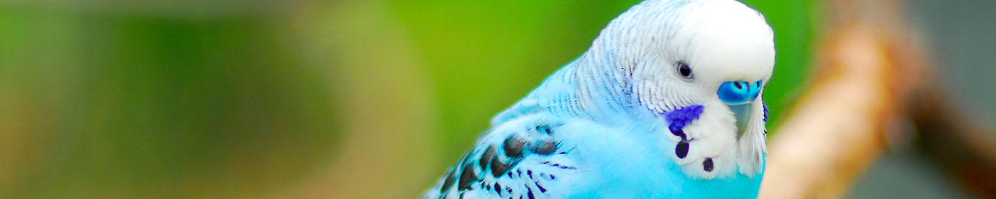Éclairage pour oiseaux