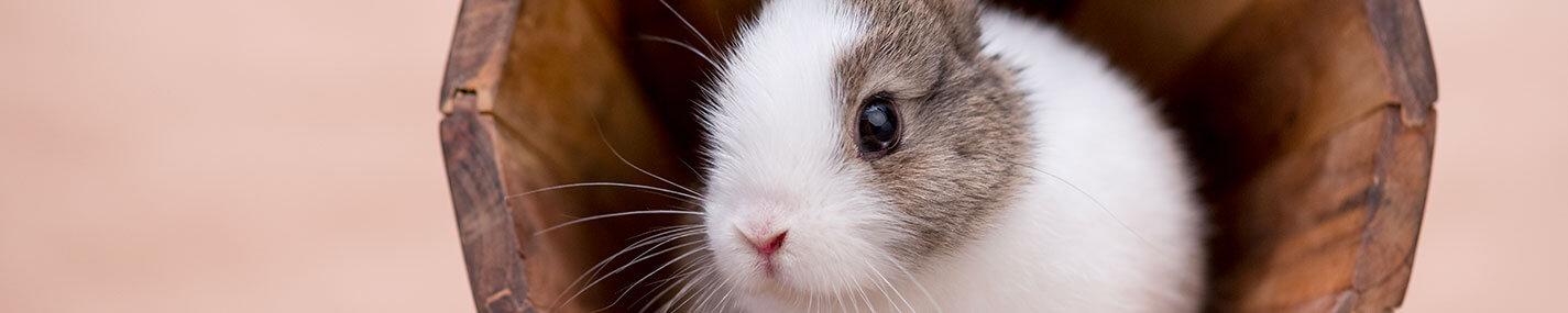 → Accessoires pour petits mammifères
