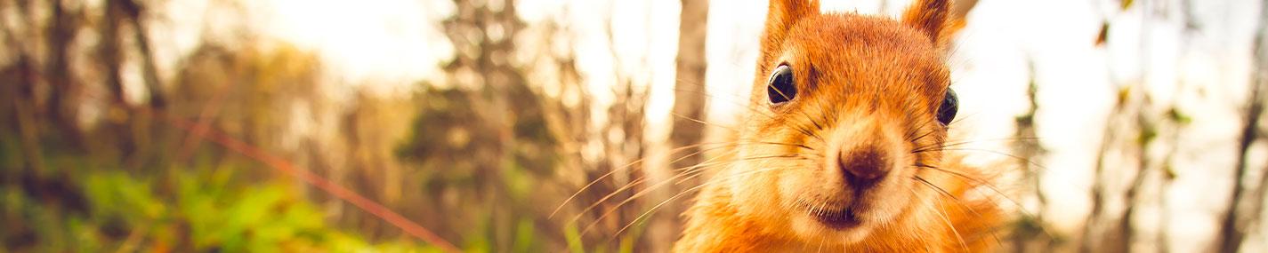 Mangeoires & abreuvoirs pour Animaux de la nature