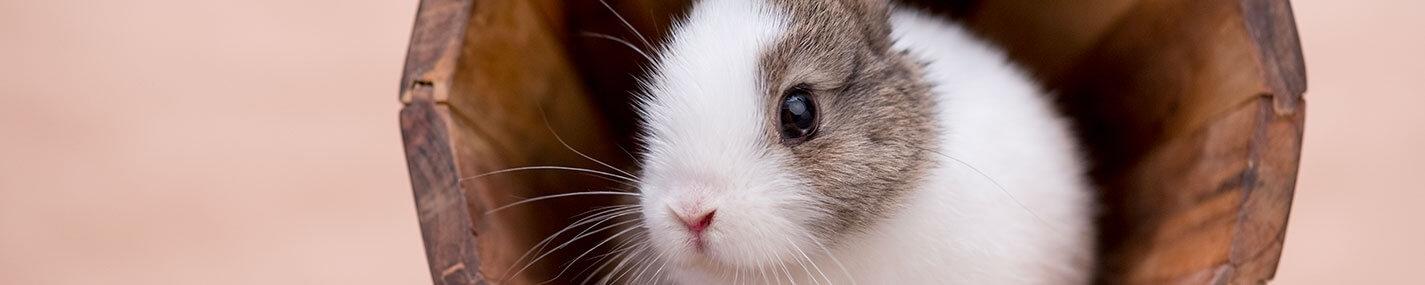 Baignoires pour petits mammifères