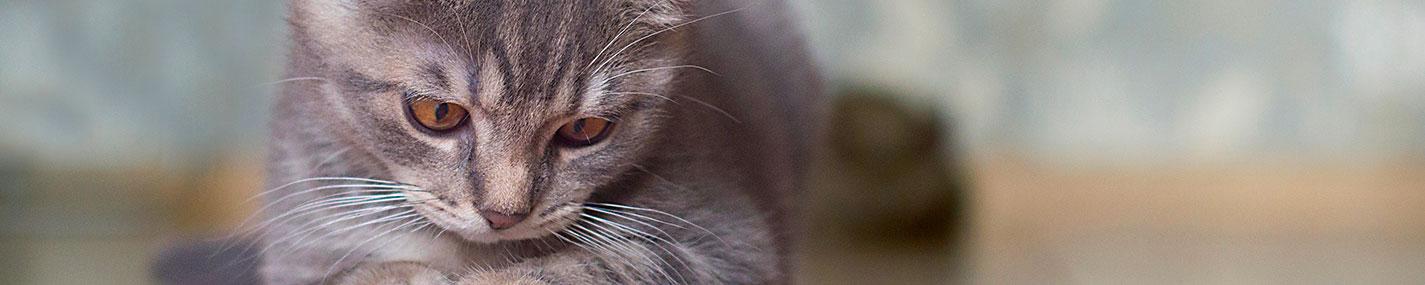 Minérales  Litières - Litières & maisons de toilette pour chat