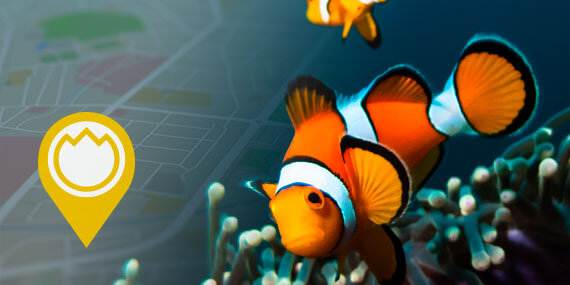 eau aquarium avec poissons